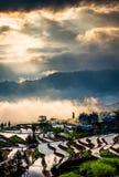 Terrasses de riz et nuages colorés Photographie stock