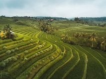 Terrasses de riz de Jatiluwih Image libre de droits