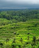 Terrasses de riz sous le ciel orageux Photo libre de droits