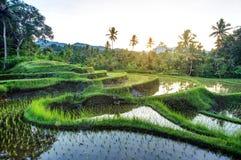 Terrasses de riz sur Bali pendant le lever de soleil, Indonésie Images stock