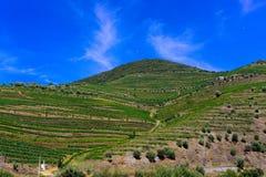 Terrasses de vignobles de Douro, vin de Porto, paysage de montagnes Photographie stock libre de droits