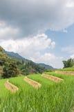 Terrasses et ciel de riz Image libre de droits