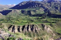 Terrasses faites un pas en canyon de Colca au Pérou Photos stock