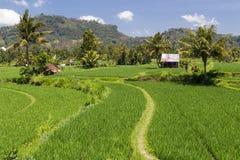 Terrasses rurales de riz dans Bali, Indonésie Images stock