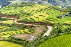 Terrasses vertes et jaunes de gisement de riz photographie stock