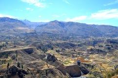 Terrassfält i den Colca dalen, Peru royaltyfri bild