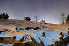 Terrassfält i västra Kina Royaltyfria Foton