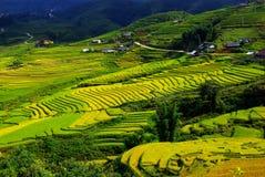 Terrassrice sätter in vietnam Arkivfoton