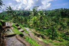 Terrassricefält på Bali, Indonesien arkivbild