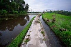 Terrassricefält på Bali, Indonesien royaltyfria bilder