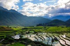Terrassris i Sapa - Viet Nam Royaltyfri Foto