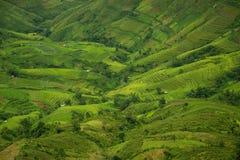 Terrassrisfält i Vietnam Royaltyfria Bilder