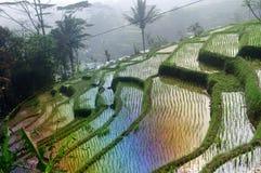 Terrassrisfält på Java, Indonesien Royaltyfri Fotografi