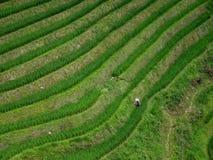 Terrassrisfältfälten i område runt om Yangshuo i det Guangxi landskapet i Kina Arkivfoto