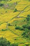 Terrassrisfält i Nepal Arkivfoto