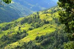 Terrassrisfält i Nepal Arkivbilder