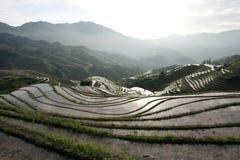 Terrasvormig padieveld Stock Foto