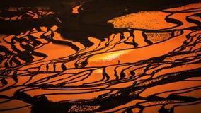 Terrasvormig padieveld Stock Afbeeldingen