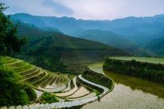 Terrasvormig padieveld in Azië Stock Fotografie