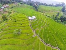 Terrasvormig Padieveld in Heuvel Stock Afbeeldingen