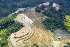 terrasvormig padieveld in Hoangsuphi, Hagiang, seizoen van het gieten van water Royalty-vrije Stock Afbeeldingen