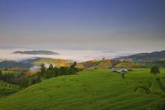 Terrasvormig padieveld in Mae Cham royalty-vrije stock afbeeldingen