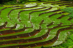 Terrasvormig padieveld in Mae Cham, Chiangmai, Thailand royalty-vrije stock foto