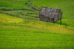 Terrasvormig padieveld in Mu Cang Chai, Vietnam stock fotografie