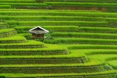 Terrasvormig padieveld in Mu Cang Chai, Vietnam royalty-vrije stock foto's