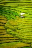 Terrasvormig padieveld in Mu Cang Chai, Vietnam stock foto's
