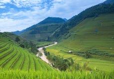 Terrasvormig padieveld in rijstseizoen Royalty-vrije Stock Foto