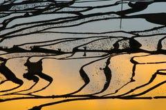 Terrasvormig padieveld (Yuanyang Hani) stock foto's