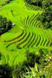 Terrasvormig padieveldenlandschap in Hoang Su Phi, Ha Giang Stock Afbeeldingen