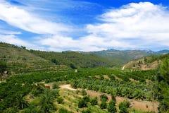Terrasvormige landbouwbedrijfvallei Catalonië, Spanje Stock Fotografie