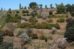Terrasvormige landbouwgrond, Alhaurin Gr Grande, Andalusia. Royalty-vrije Stock Afbeeldingen