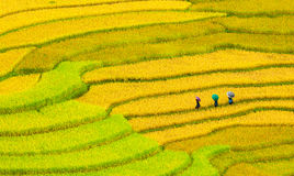 Terrasvormige padievelden royalty-vrije stock foto's