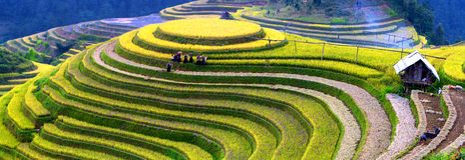 Terrasvormige padievelden Stock Foto