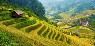 Terrasvormige padievelden Royalty-vrije Stock Foto