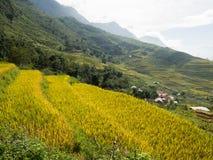 Terrasvormige padievelden in heuvels Stock Foto's