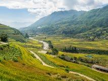Terrasvormige padievelden in heuvels Stock Fotografie