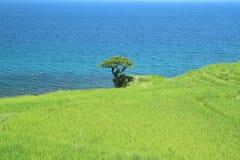 Terrasvormige padievelden in Japan royalty-vrije stock afbeelding