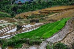 Terrasvormige padievelden op regenseizoen in Vietnam stock afbeeldingen