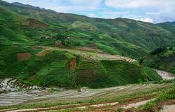 Terrasvormige padievelden op regenseizoen in Vietnam royalty-vrije stock foto's