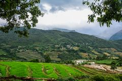 Terrasvormige padievelden op regenseizoen in Vietnam royalty-vrije stock foto