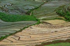 Terrasvormige padievelden op regenseizoen in Vietnam stock foto