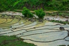 Terrasvormige padievelden op regenseizoen in Vietnam stock afbeelding
