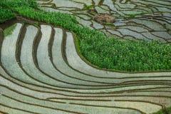 Terrasvormige padievelden op regenseizoen in Vietnam stock foto's