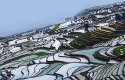 Terrasvormige padievelden in Yuanyang-provincie, Yunnan, China Stock Afbeelding