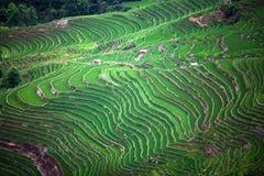 Terrasvormige padievelden in Yuanyang-provincie, Yunnan, China Stock Foto