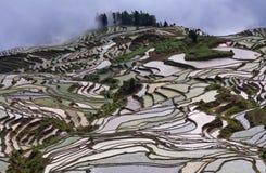 Terrasvormige padievelden in Yuanyang-provincie, Yunnan, China Royalty-vrije Stock Fotografie